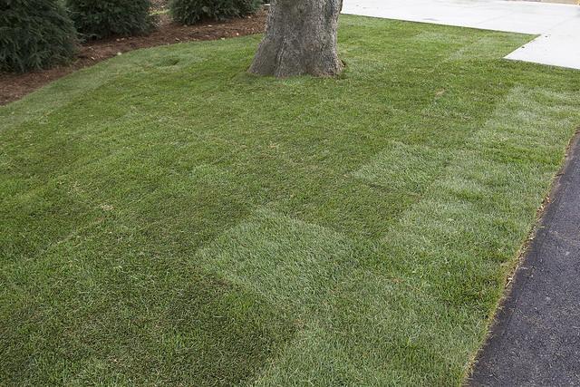 lawn problems