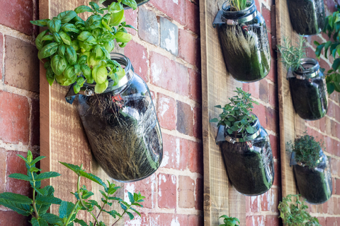 vertical garden concept with mason jars clamped to boards