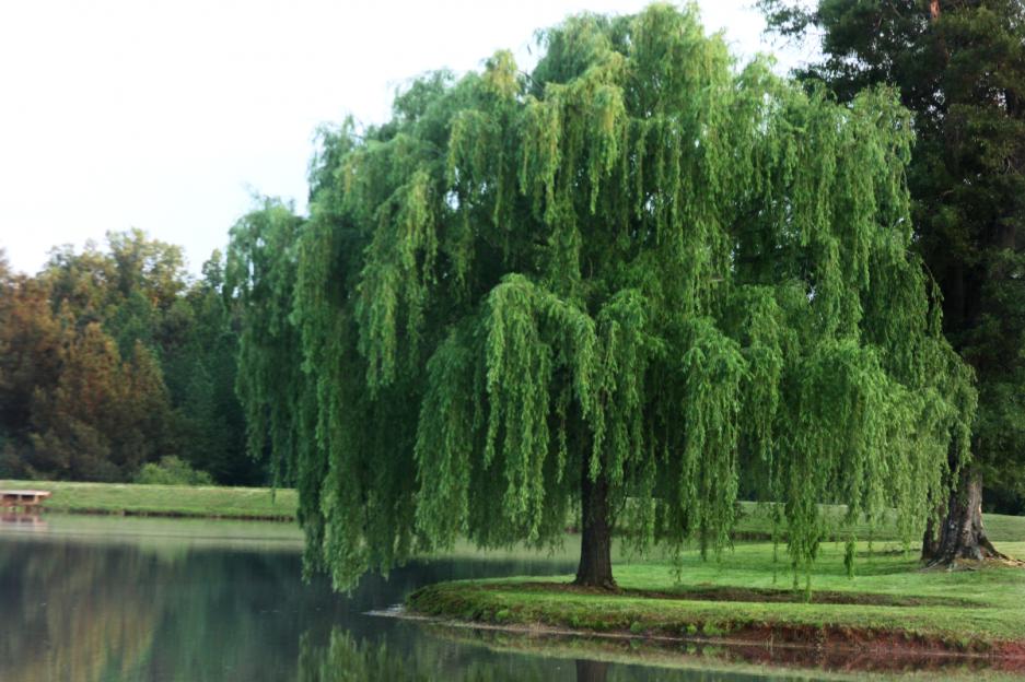 Erosion Prevention Using Plants Bigyellowbag Lawn