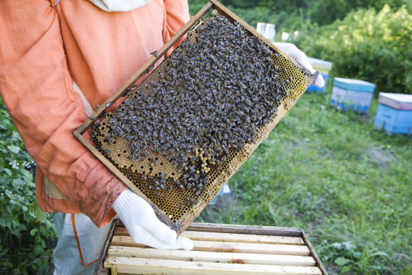 Pollinators BigYellowBag Black Garden Soil Big Yellow Bag Bees Flowers