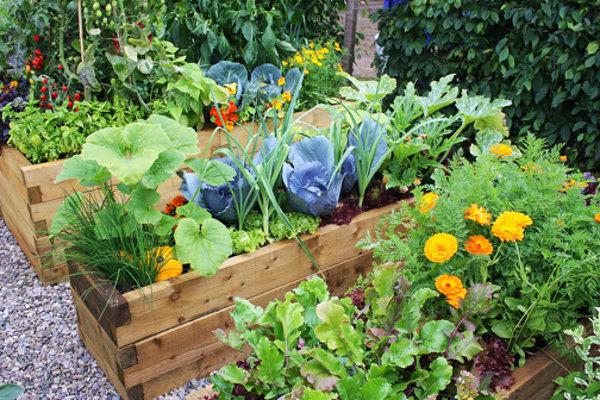 Companion Planting BigYellowBag Big Yellow Bag Black Garden Soil Vegetables Flowers