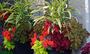 Planters BigYellowBag Black Garden Soil Flowers Gardening Vegetables